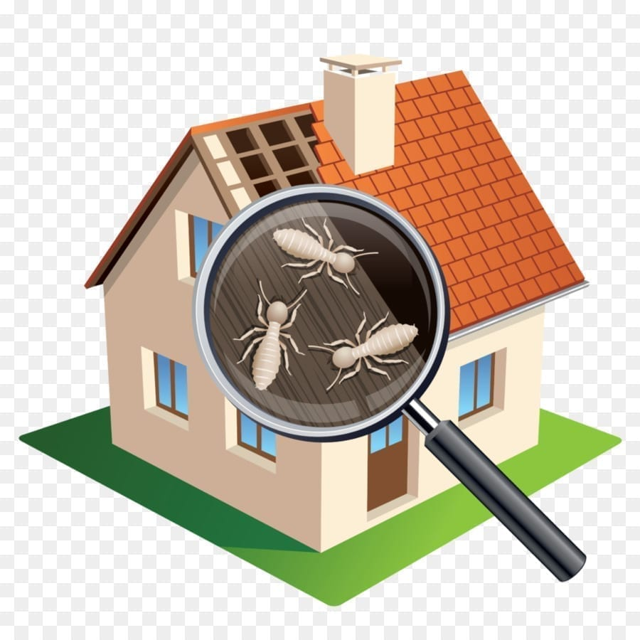 https://www.scope-inspections.com/wp-content/uploads/2019/01/termite-inspections-3.jpg